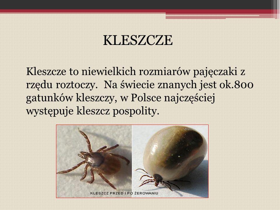 Kleszcze to niewielkich rozmiarów pajęczaki z rzędu roztoczy. Na świecie znanych jest ok.800 gatunków kleszczy, w Polsce najczęściej występuje kleszcz