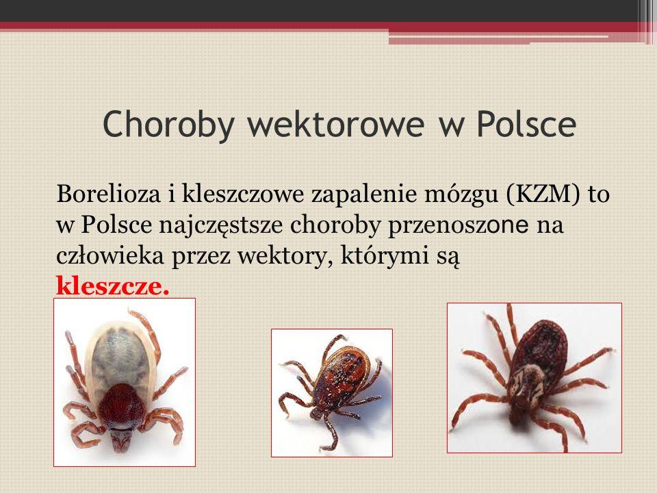 Choroby wektorowe w Polsce Borelioza i kleszczowe zapalenie mózgu (KZM) to w Polsce najczęstsze choroby przenosz one na człowieka przez wektory, który
