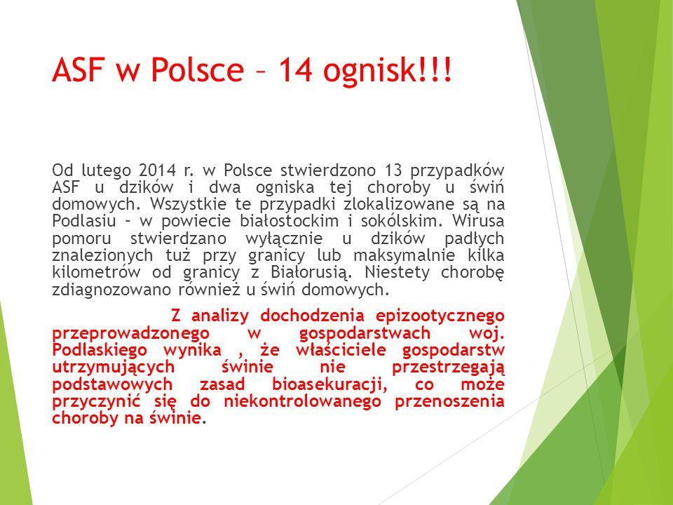 ASF w Polsce – 14 ognisk!!! Od lutego 2014 r. w Polsce stwierdzono 13 przypadków ASF u dzików i dwa ogniska tej choroby u świń domowych. Wszystkie te