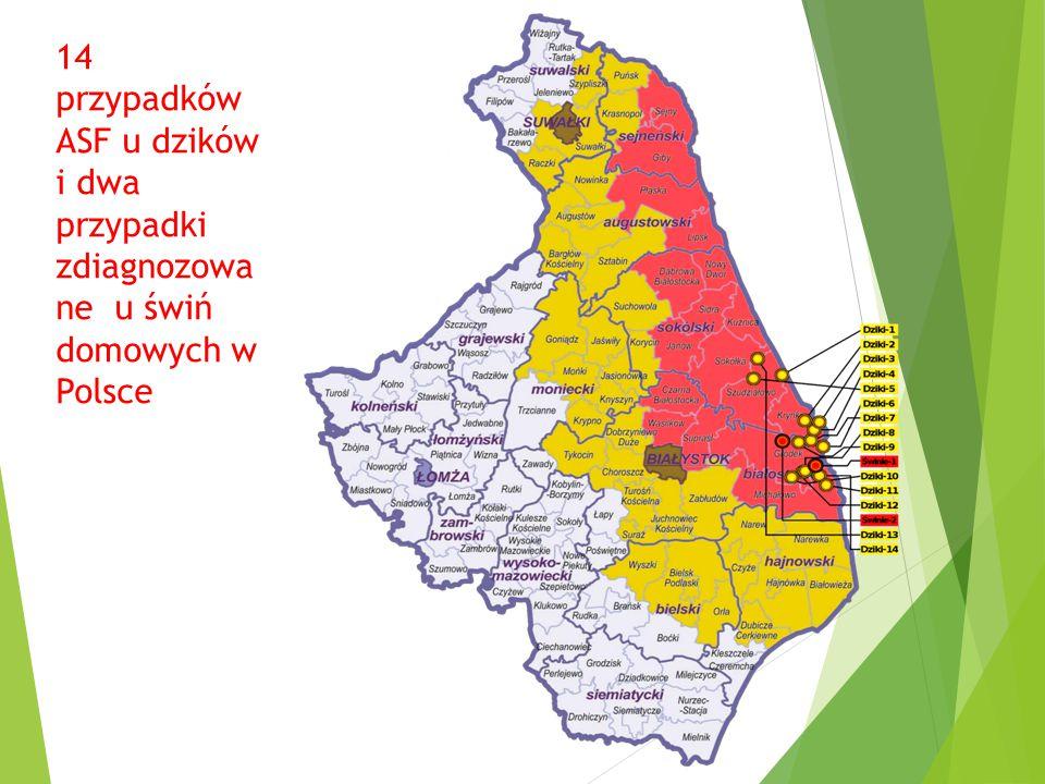 14 przypadków ASF u dzików i dwa przypadki zdiagnozowa ne u świń domowych w Polsce