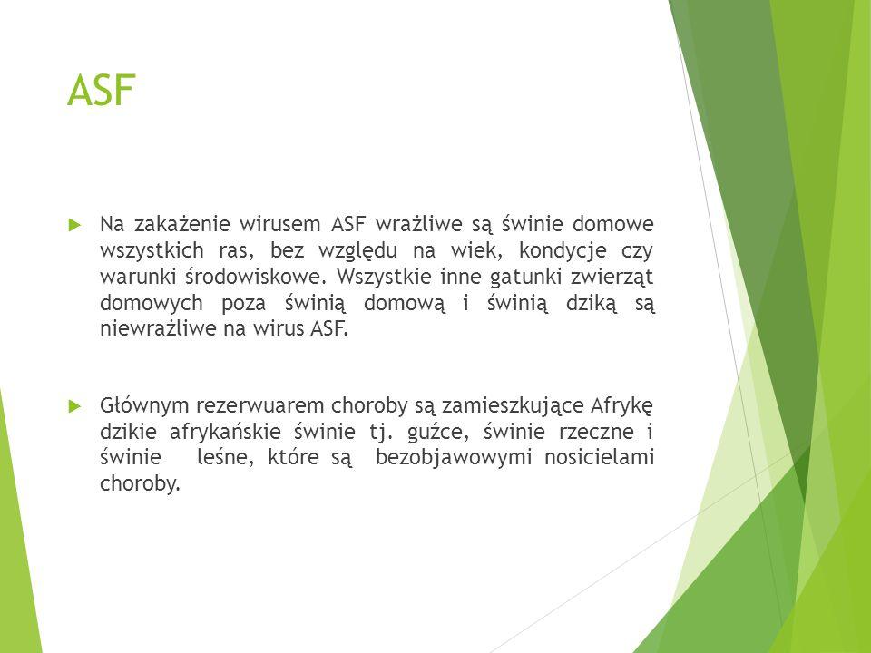 ASF  Na zakażenie wirusem ASF wrażliwe są świnie domowe wszystkich ras, bez względu na wiek, kondycje czy warunki środowiskowe. Wszystkie inne gatunk