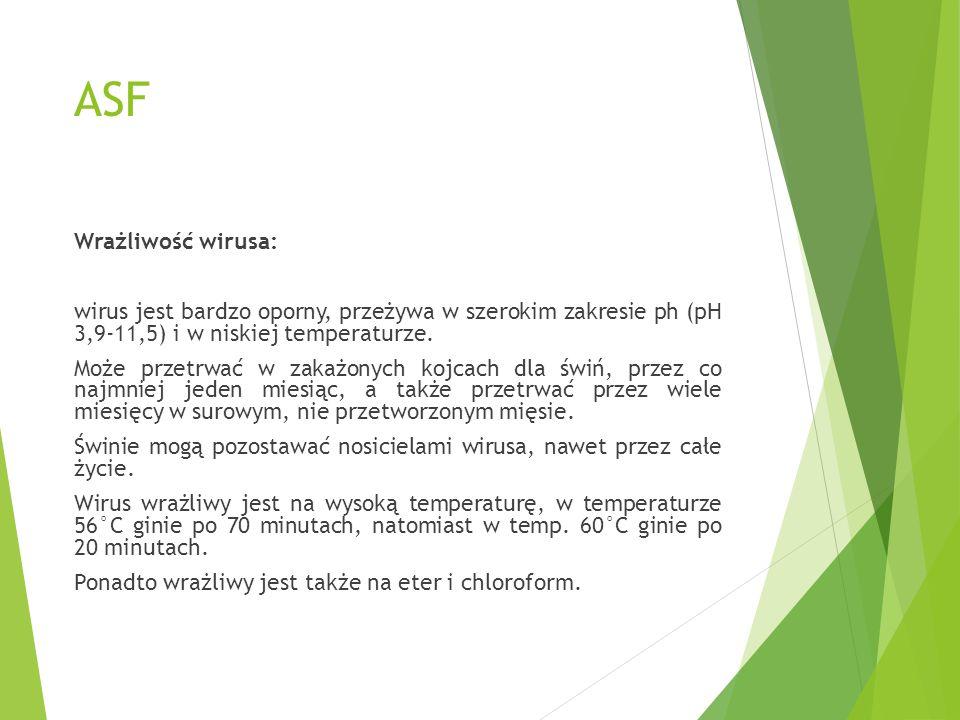 ASF Wrażliwość wirusa: wirus jest bardzo oporny, przeżywa w szerokim zakresie ph (pH 3,9-11,5) i w niskiej temperaturze. Może przetrwać w zakażonych k