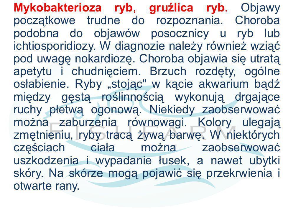 Mykobakterioza ryb, gruźlica ryb. Objawy początkowe trudne do rozpoznania. Choroba podobna do objawów posocznicy u ryb lub ichtiosporidiozy. W diagnoz