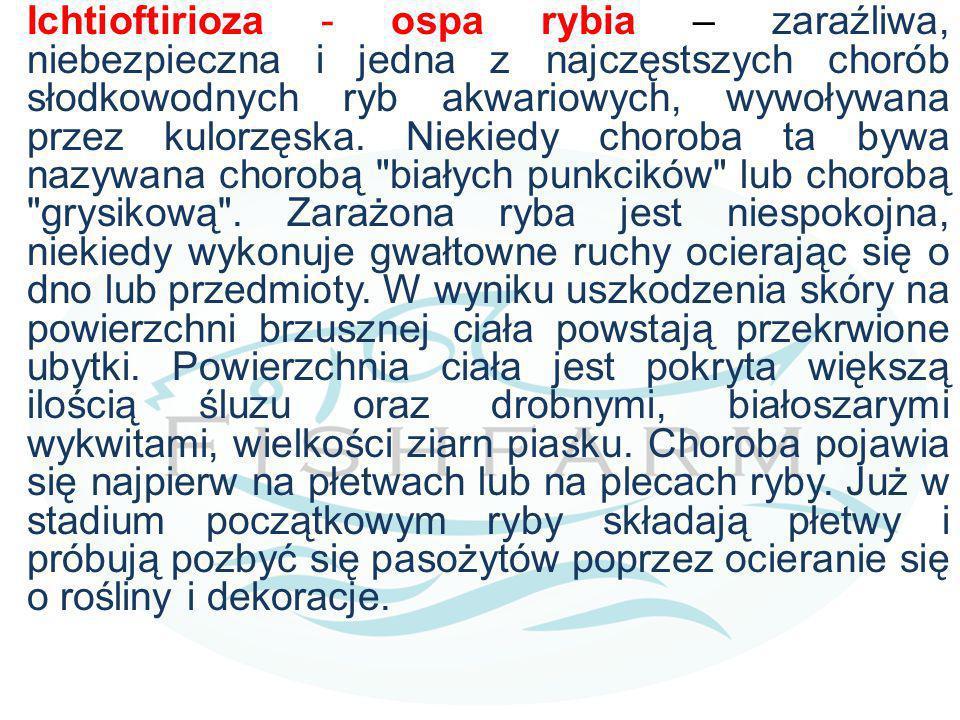 Ichtioftirioza - ospa rybia – zaraźliwa, niebezpieczna i jedna z najczęstszych chorób słodkowodnych ryb akwariowych, wywoływana przez kulorzęska. Niek