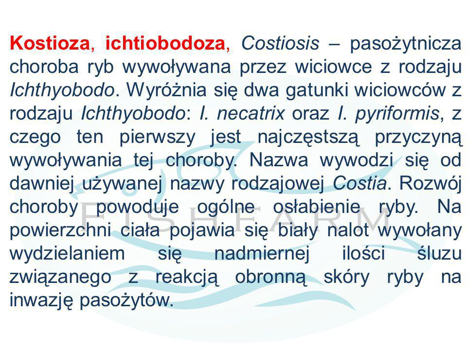 Kostioza, ichtiobodoza, Costiosis – pasożytnicza choroba ryb wywoływana przez wiciowce z rodzaju Ichthyobodo. Wyróżnia się dwa gatunki wiciowców z rod