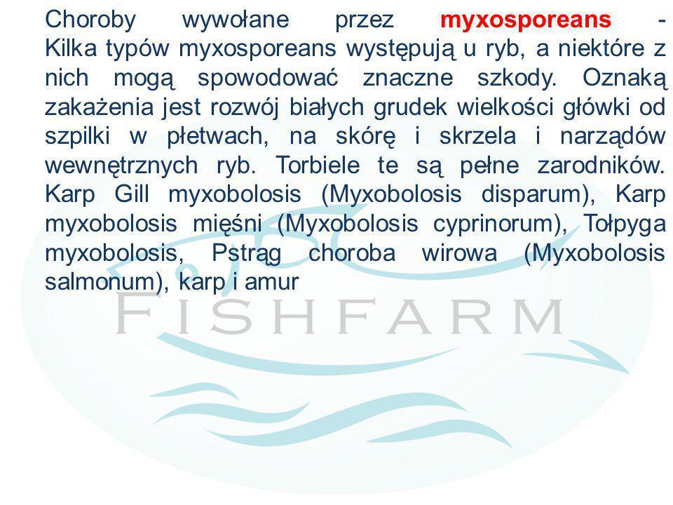 Choroby wywołane przez myxosporeans - Kilka typów myxosporeans występują u ryb, a niektóre z nich mogą spowodować znaczne szkody. Oznaką zakażenia jes