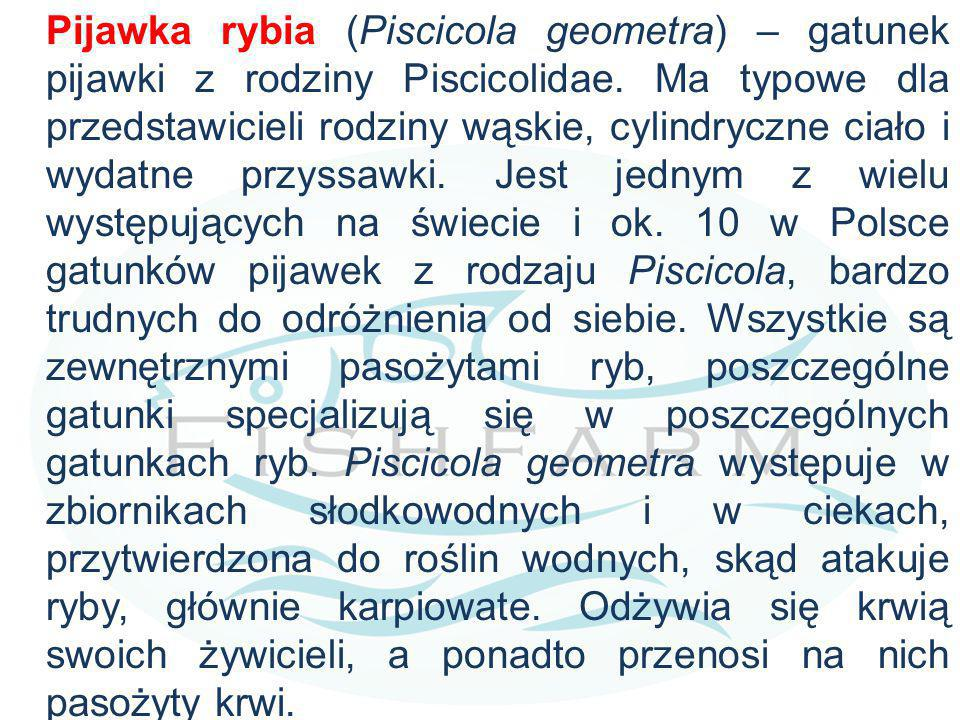 Pijawka rybia (Piscicola geometra) – gatunek pijawki z rodziny Piscicolidae. Ma typowe dla przedstawicieli rodziny wąskie, cylindryczne ciało i wydatn