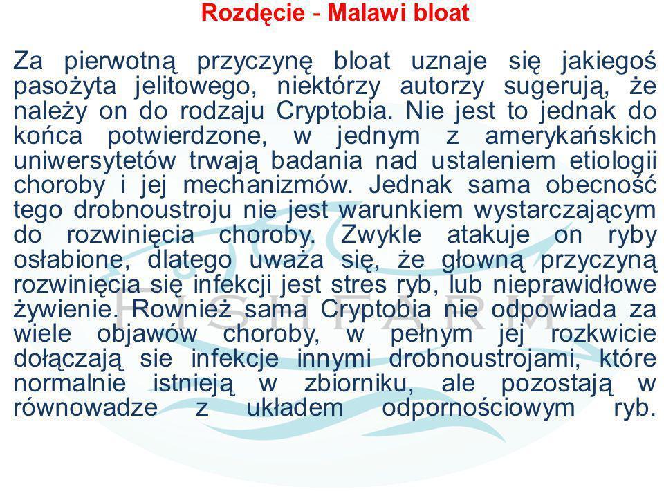 Rozdęcie - Malawi bloat Za pierwotną przyczynę bloat uznaje się jakiegoś pasożyta jelitowego, niektórzy autorzy sugerują, że należy on do rodzaju Cryp