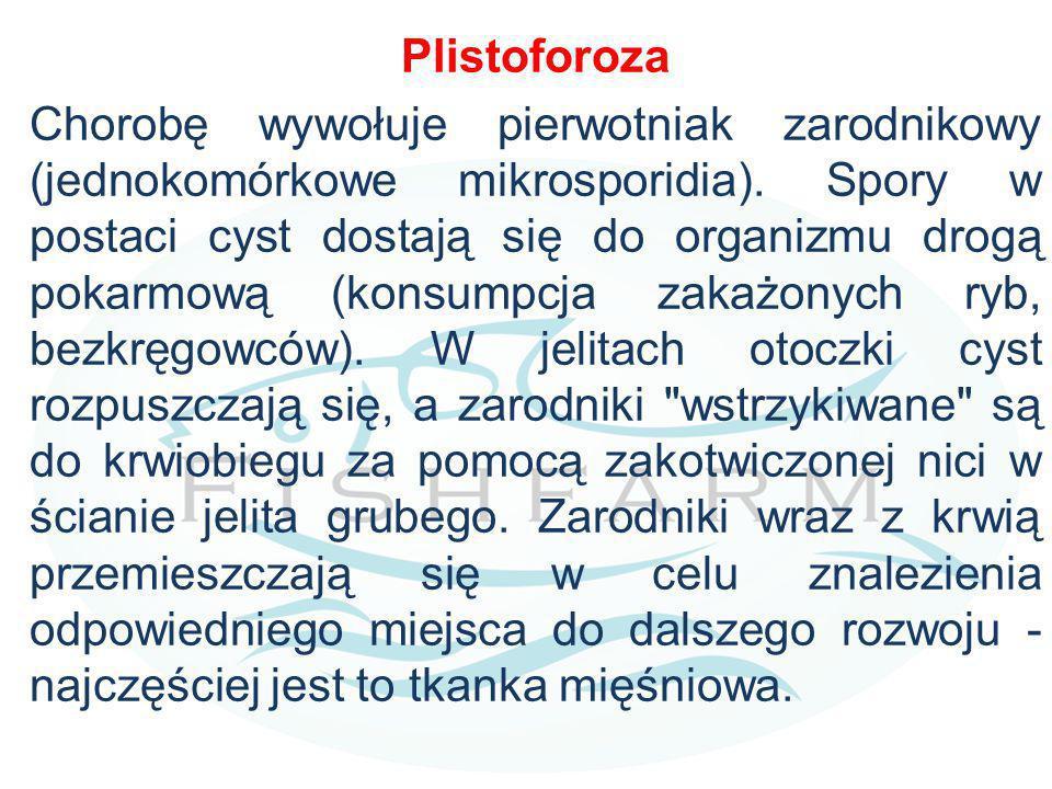 Plistoforoza Chorobę wywołuje pierwotniak zarodnikowy (jednokomórkowe mikrosporidia). Spory w postaci cyst dostają się do organizmu drogą pokarmową (k