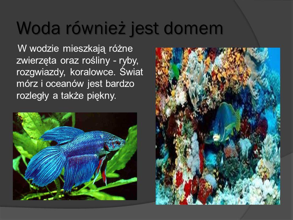 Woda również jest domem W wodzie mieszkają różne zwierzęta oraz rośliny - ryby, rozgwiazdy, koralowce. Świat mórz i oceanów jest bardzo rozległy a tak