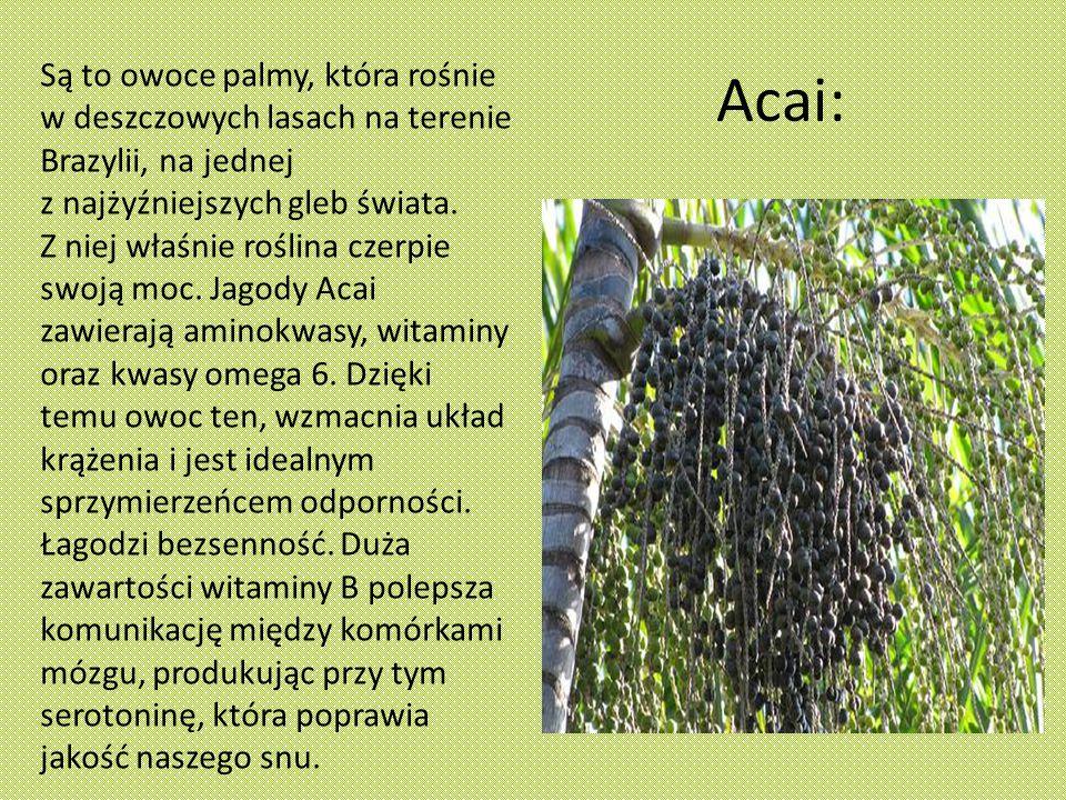 Acai: Są to owoce palmy, która rośnie w deszczowych lasach na terenie Brazylii, na jednej z najżyźniejszych gleb świata.
