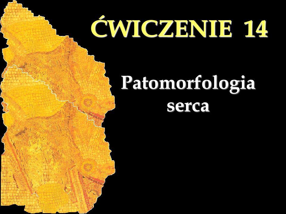 ĆWICZENIE 14 Patomorfologia serca