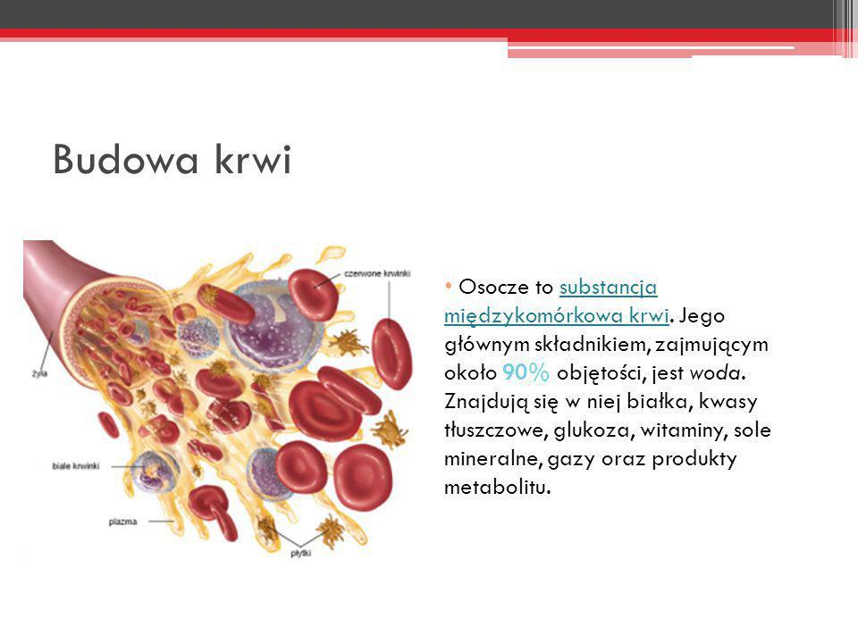 Budowa krwi Osocze to substancja międzykomórkowa krwi. Jego głównym składnikiem, zajmującym około 90% objętości, jest woda. Znajdują się w niej białka