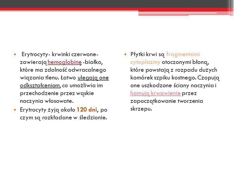 Erytrocyty- krwinki czerwone- zawierają hemoglobinę -białko, które ma zdolność odwracalnego wiązania tlenu. Łatwo ulegają one odkształceniom, co umożl