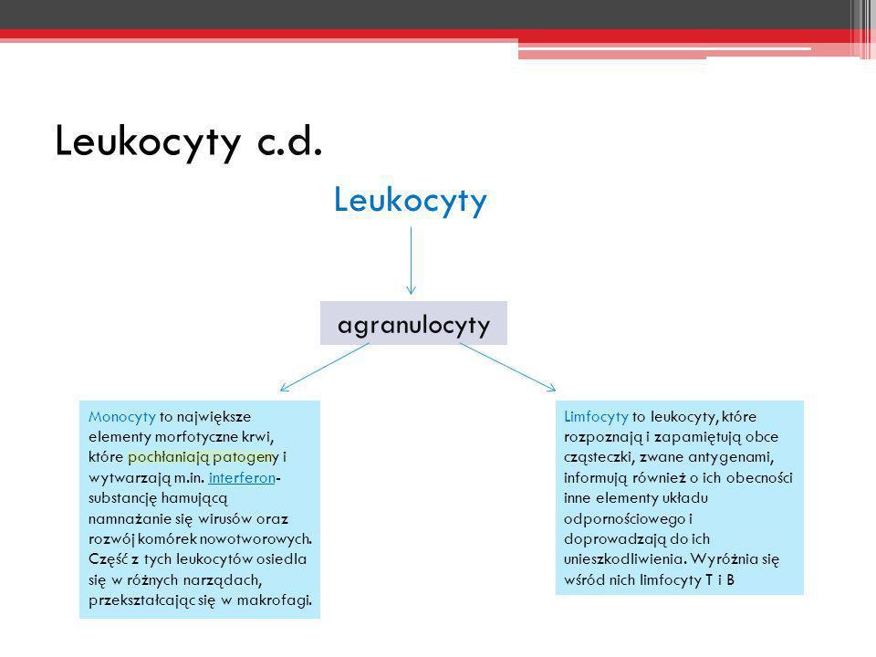 Leukocyty c.d. Leukocyty agranulocyty Monocyty to największe elementy morfotyczne krwi, które pochłaniają patogeny i wytwarzają m.in. interferon- subs