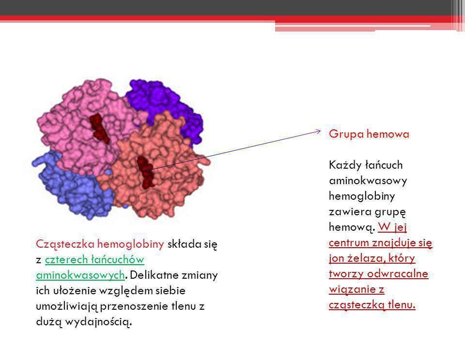 Grupa hemowa Każdy łańcuch aminokwasowy hemoglobiny zawiera grupę hemową. W jej centrum znajduje się jon żelaza, który tworzy odwracalne wiązanie z cz