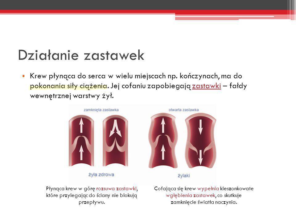 Działanie zastawek Krew płynąca do serca w wielu miejscach np. kończynach, ma do pokonania siły ciążenia. Jej cofaniu zapobiegają zastawki – fałdy wew