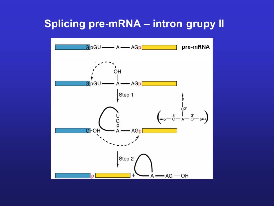 Splicing pre-mRNA – intron grupy II